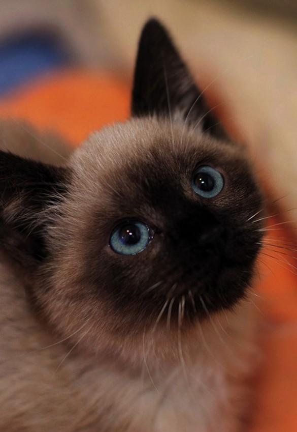 understanding cat behavior affection